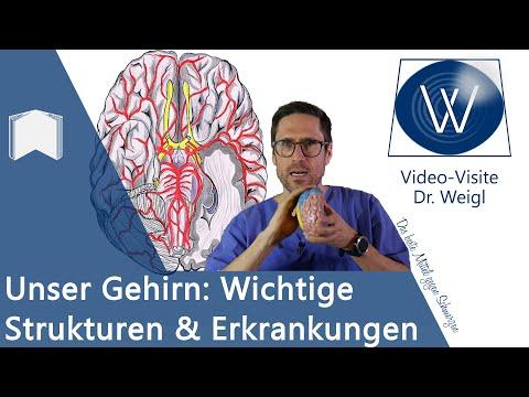 Das Gehirn: Aufbau & Funktion - 6 häufige Erkrankungen von Alzheimer über Epilepsie bis Schlaganfall