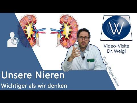 Unsere Nieren: Aufbau, Aufgaben & Funktionsweise einfach erklärt - filtern, Hormone (Vitamin D) etc.