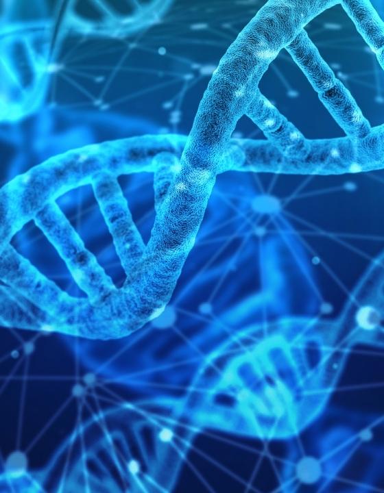 30 Prozent länger leben dank diesen Wirkstoffen