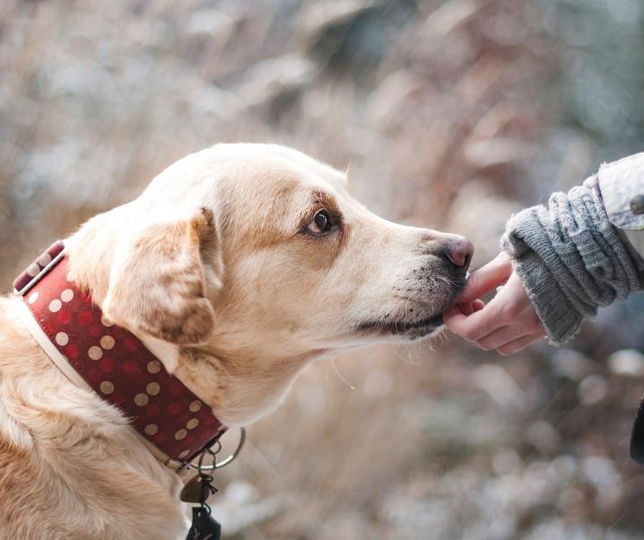 Frau verliert Beine und Hände auf Grund einer Infektion durch ihren Hund