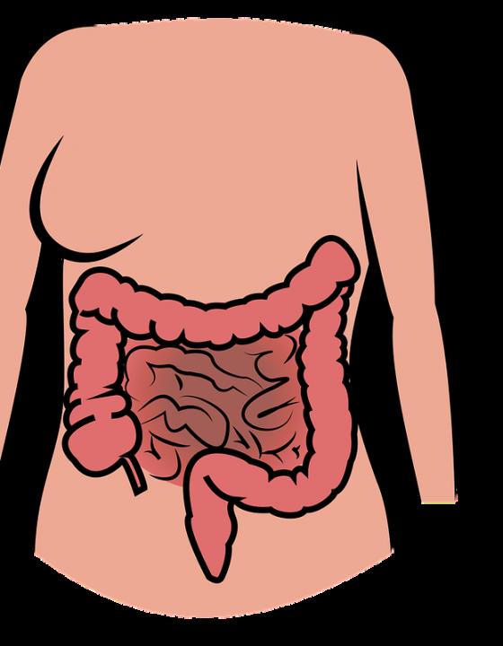 Darmflora und Depression: Eine unterschätzte Verbindung