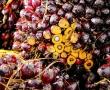 Sauerkirschen: Naturmittel bei Bluthochdruck, erhöhtem Cholesterinspiegel und Diätbeschleuniger