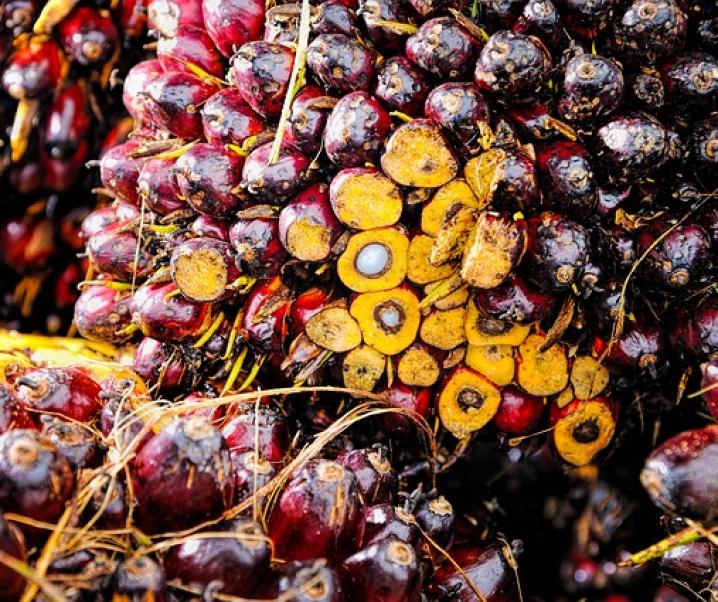 Palmöl in Lebensmittel. Schlecht für Umwelt und Gesundheit