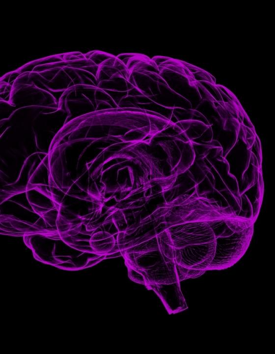 Alzheimer-Forschung: Neue Therapie soll gleich mehrere Auslöser bekämpfen