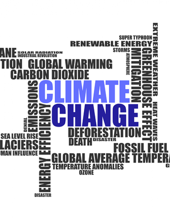 Wie der Klimawandel uns krank macht