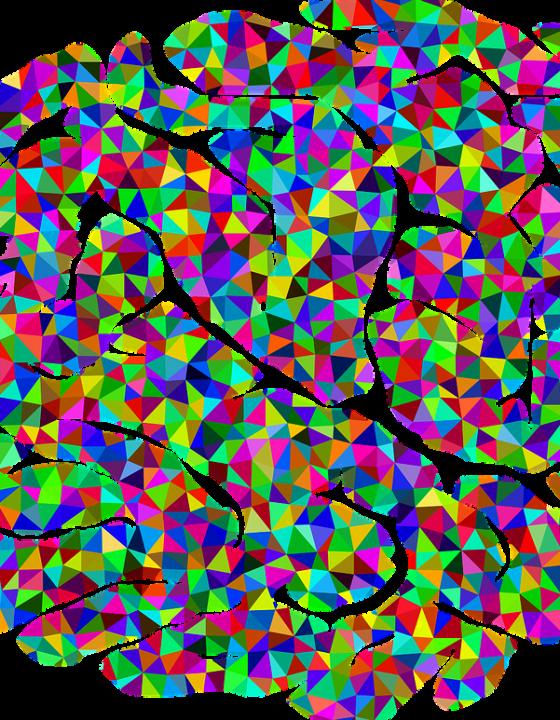 Wissenschaftler analysieren unerschlossene Gehirnstruktur