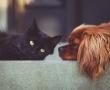 Neue Ursachen und Therapieoptionen von Fettleber identifiziert