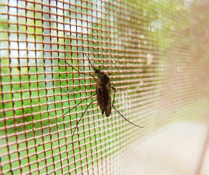 Wichtigstes Malaria-Medikament wird langsam wirkungslos – Aus diesem Grund