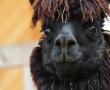Coronavirus und Spanische Grippe: Vieles wiederholt sich