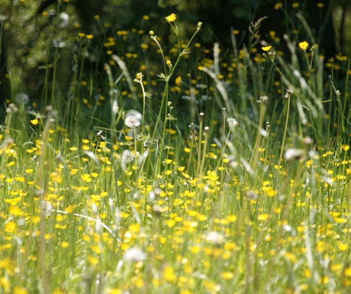 Neuer Wirkstoff aus Larven soll Allergikern das Leben erleichtern