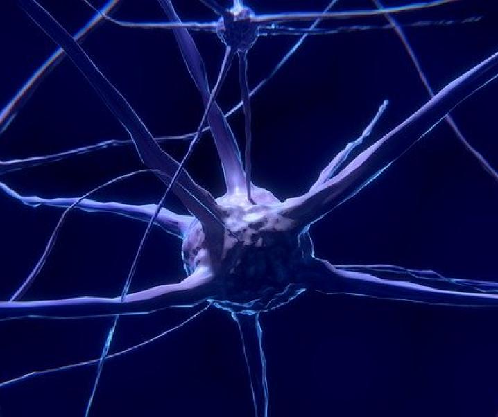 Neuer Ansatz gegen Parkinson: Abgestorbene Neuronen ersetzt