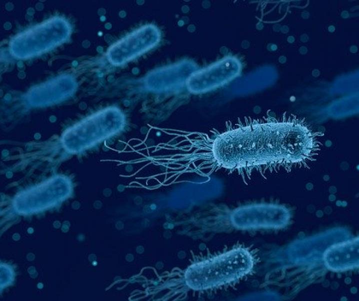 Dieses Protein schützt vor Blasenentzündungen