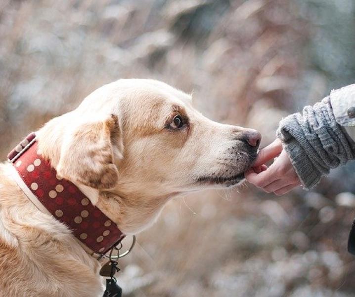 Treue Spielgefährten: Emotionale Entwicklung von Kindern durch Hunde gestärkt