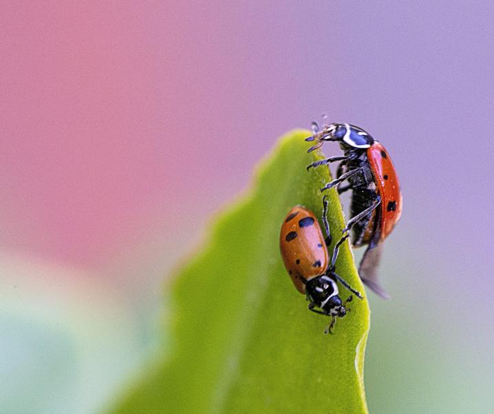 Medikamente aus Insekten: Sieht so die Zukunft aus?