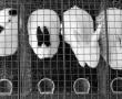 Tierversuche & Tierschutz: Ein unvereinbarer Widerspruch?