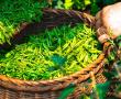 Studien zeigen: Schnupfen und Erkältung könnten vor Corona schützen