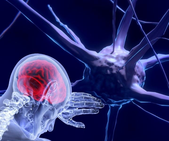 Blut-Hirn-Schranke: Hintertürchen zum Gehirn für Schadstoffe?