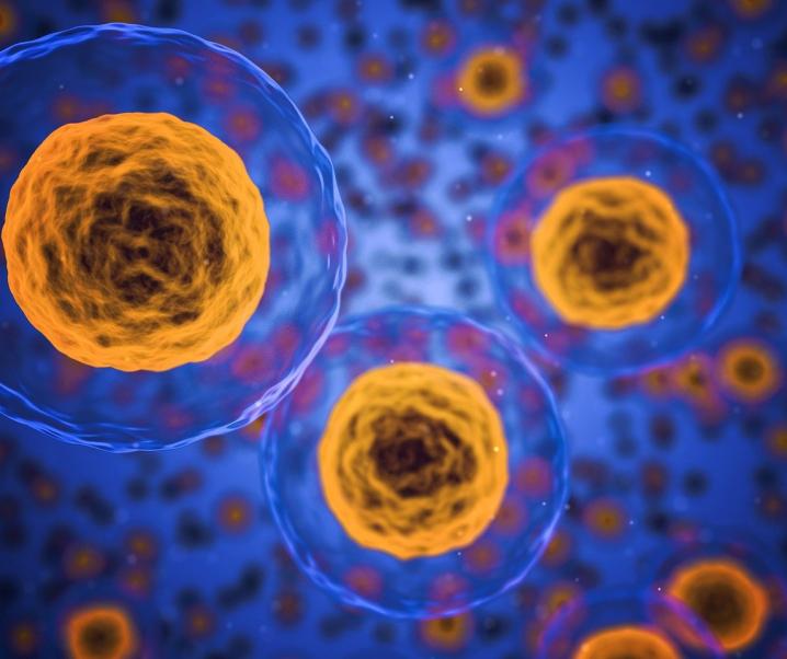 Neuer Schwachpunkt von Krebs entlarvt – Kommt bald das Universalmedikament?