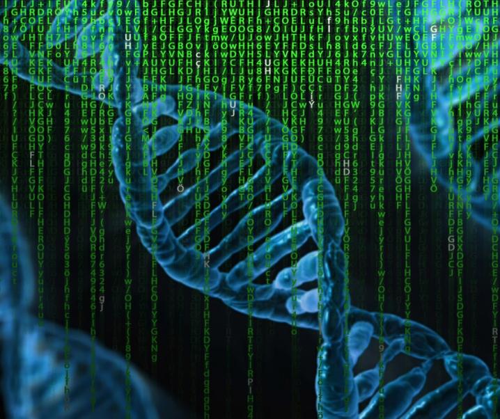 Genmechanismus für Fehlbildungen entschlüsselt