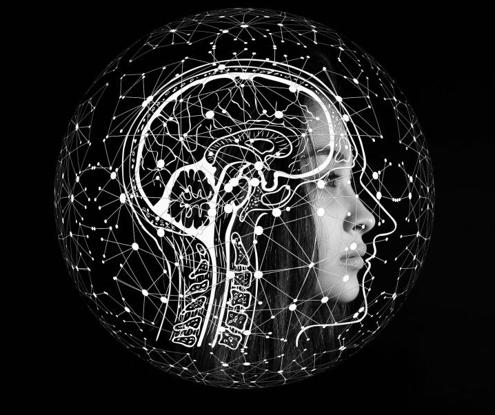 Erwerb einer Fremdsprache steigert die Gehirnaktivität – vorerst