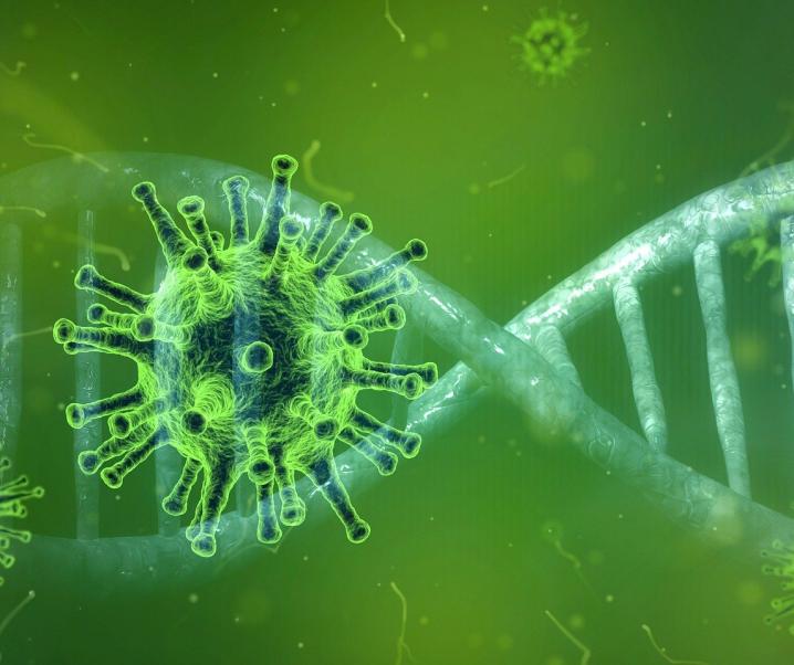 Evolutionäre Genomanalyse: Coronavirus-Masseninfektionen in der Steinzeit?