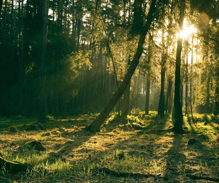 Der Klang der Natur: Wie sich der Aufenthalt im Grünen auf unsere Gesundheit auswirkt