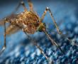 Darmkrebs: Neuer Therapieansatz im Immunsystem entdeckt