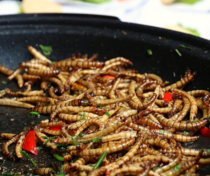 Gelber Mehlwurm: Erstes Insekt als Lebensmittel zugelassen