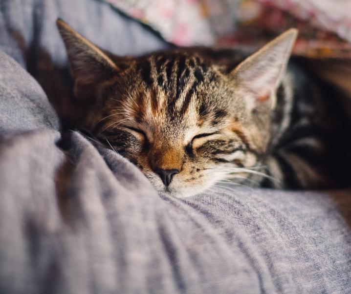 Katzenhaarallergie: Neuer Behandlungsansatz gibt Tierliebhabern Hoffnung