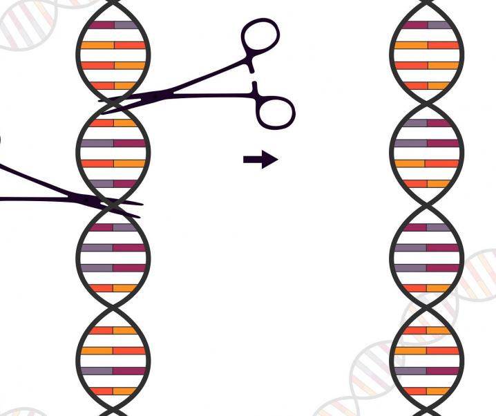 Genschere CRISPR stoppt Vermehrung von SARS-CoV-2