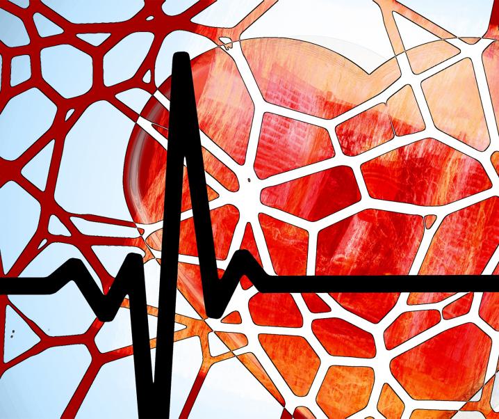 Atherosklerose: Neue Behandlungsmöglichkeit entdeckt