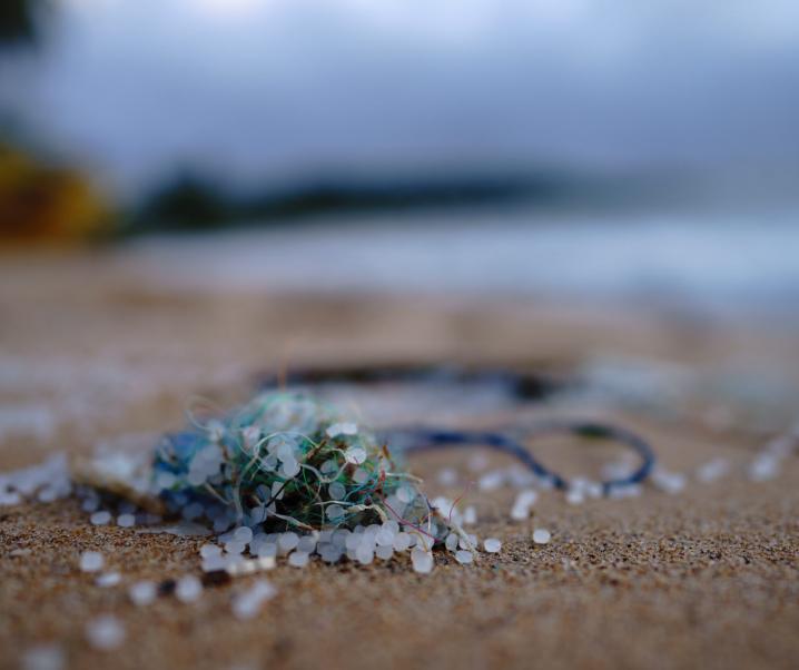 Krankheitserregende Pilze: So zerstört Mikroplastik unsere Gesundheit