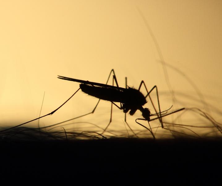 Surrende Plagegeister: So verhindern Sie den nächsten Mückenstich